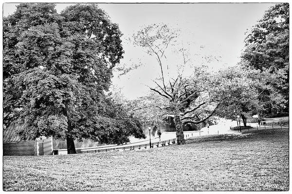 Wall Art - Photograph - Central Park In Black And White by Madeline Ellis