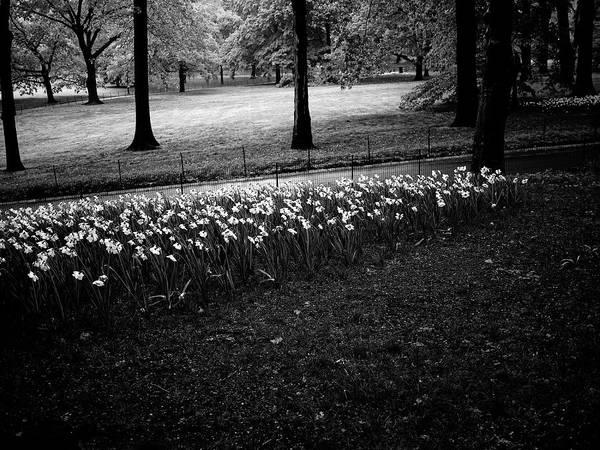 Photograph - Central Park Path 3 by M G Whittingham