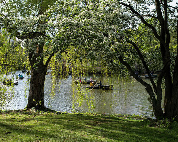 Photograph - Central Park Row Boats In The Spring New York Ny Nyc by Toby McGuire