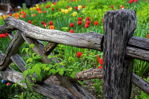 Photograph - Central Park Shakespeare Garden New York City Ny Wooden Fence by Toby McGuire