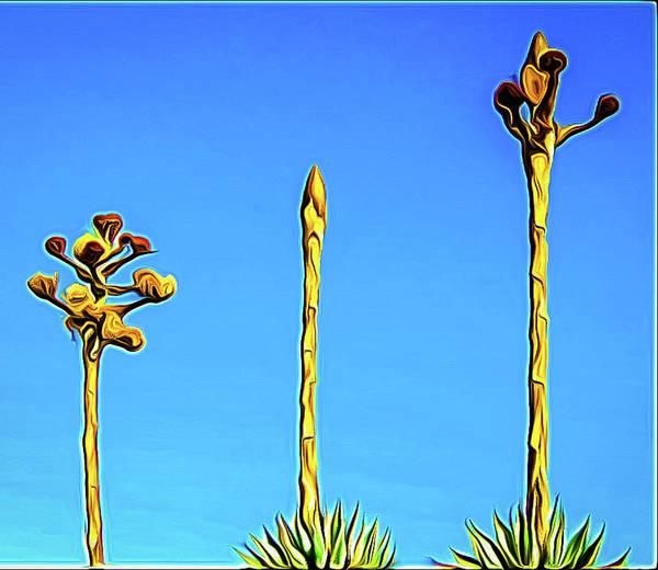 Photograph - Century Plant by Randy J Heath