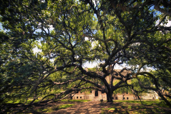 Photograph - Century Tree II by Joan Carroll
