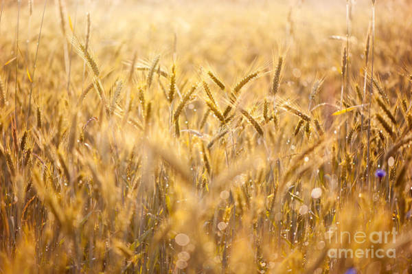 Wall Art - Photograph - Cereal Field After The Rain by Arletta Cwalina