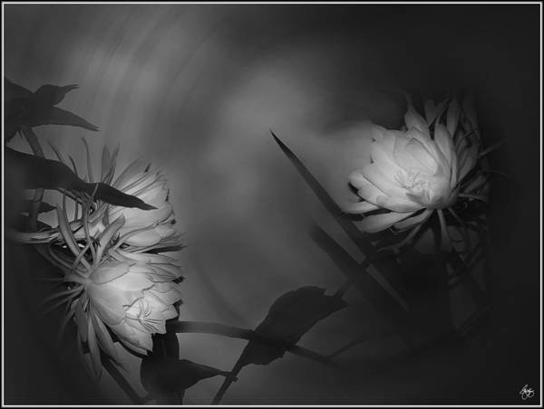 Photograph - Cereus Moonlight Monochrome  by Wayne King