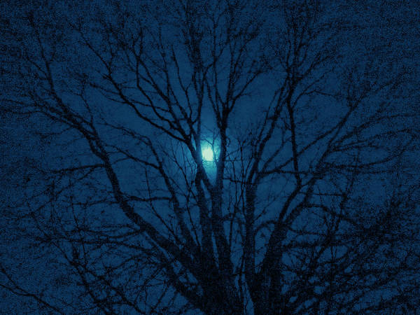 Photograph - Cerulean Night by Denise Beverly