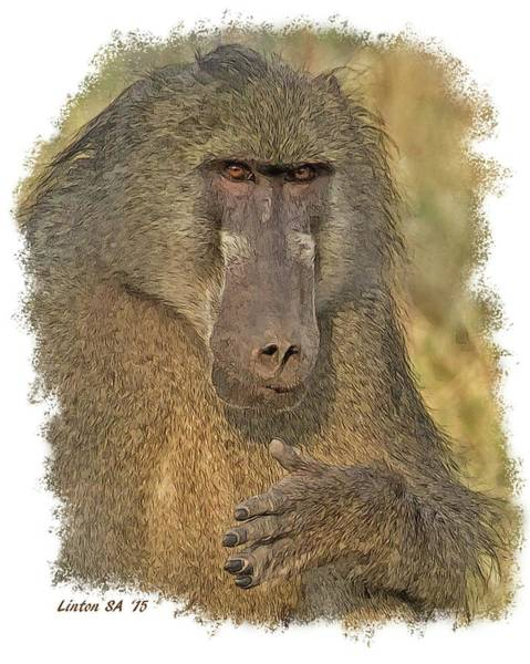 Digital Art - Chacma Baboon by Larry Linton