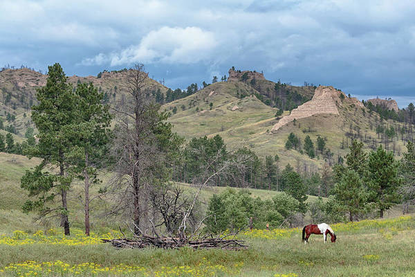 Photograph - Chadron State Park by Susan Rissi Tregoning