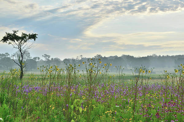 Photograph - Chain-o-lakes State Park Wildflowers by Ray Mathis