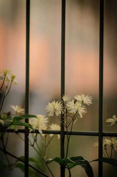 Photograph - Chained Flowers by Miguel Winterpacht