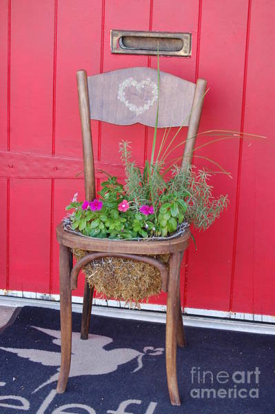 Photograph - Chair Planter by Frank Stallone