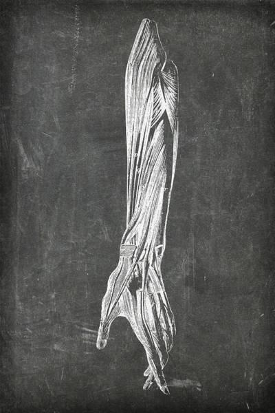 Digital Art - Chalkboard Anatomical Arm 2 by Renee Hong