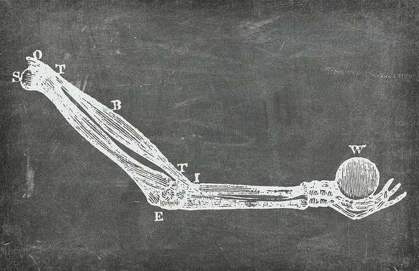 Digital Art - Chalkboard Anatomical Arm Medical Art by Renee Hong