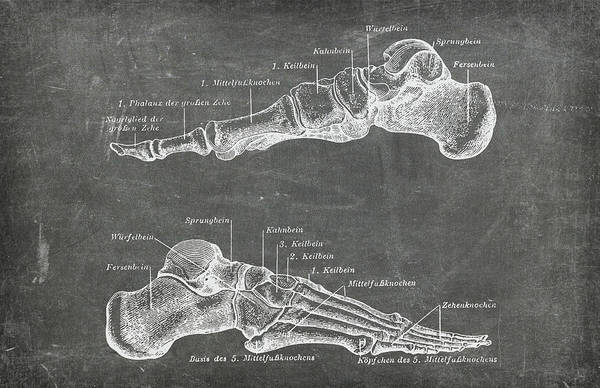 Photograph - Chalkboard Anatomical Foot Medical Art by Renee Hong