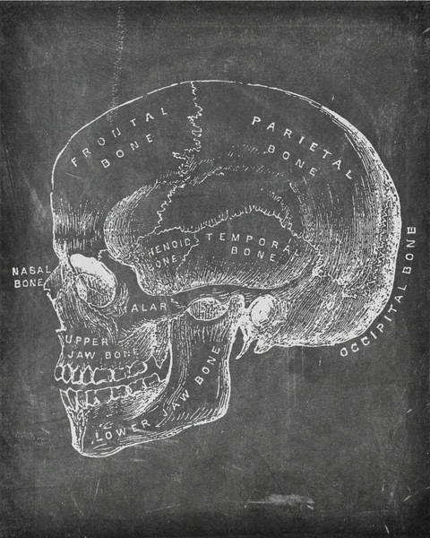 Digital Art - Chalkboard Anatomical Skull by Renee Hong