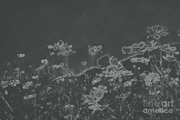 Beautiful Park Drawing - Chalkboard Drawing Fully Bloomed Colorful Cosmos On Mountain La by Eiko Tsuchiya