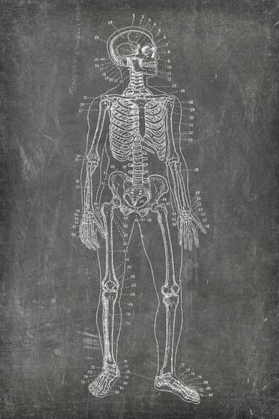 Digital Art - Chalkboard Skeleton Medical Art by Renee Hong