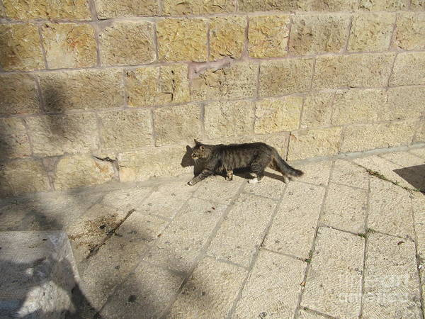 Photograph - Chamber Of The Holocaust Cat by Donna L Munro