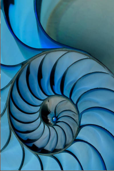 Wall Art - Photograph - Chambered Nautilus In Blue by Greg Waters