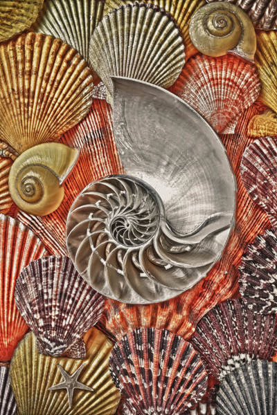 Nautilus Wall Art - Photograph - Chambered Nautilus Shell Abstract by Garry Gay