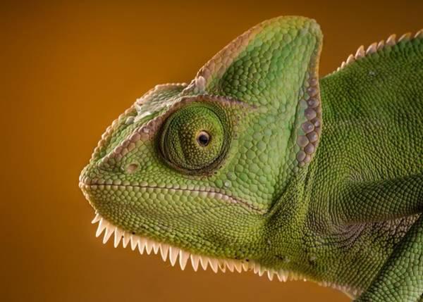 Fantasy Digital Art - Chameleon by Maye Loeser