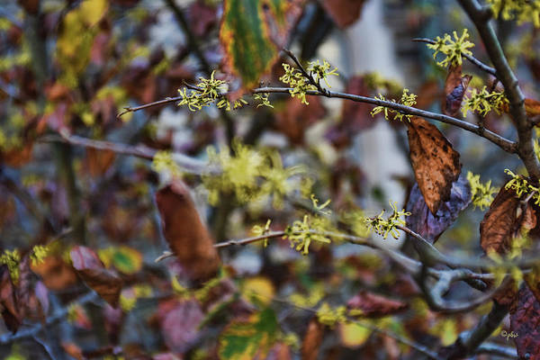 Photograph - Change Of Seasons by Paulette B Wright