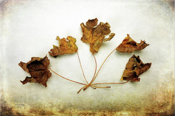 Photograph - Changes by Randi Grace Nilsberg