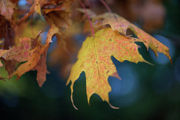 Wall Art - Photograph - Changing Leaves by Rick Berk