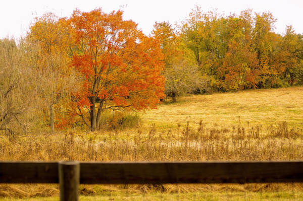 Photograph - Changing Seasons Of Chester County by Susan Maxwell Schmidt