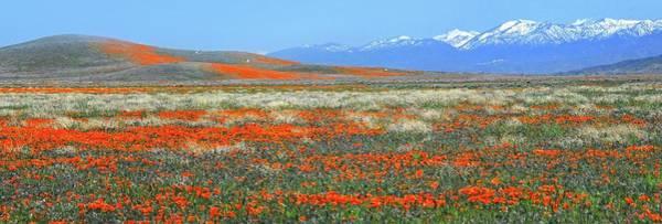 Photograph - Changing Seasons Panorama by Lynn Bauer