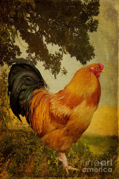 Rooster Photograph - Chanticleer by Lois Bryan