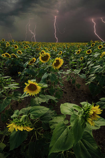 Wall Art - Photograph - Chaos  by Aaron J Groen