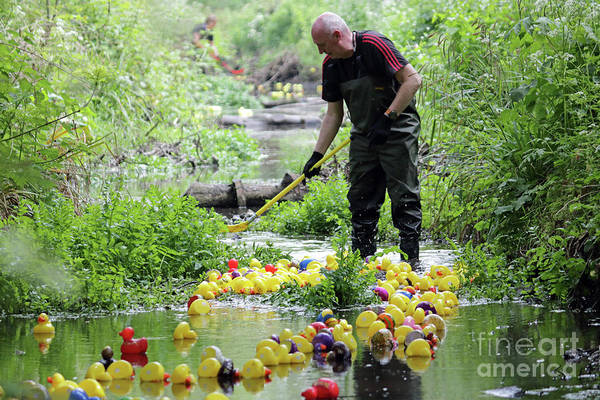 Photograph - Charity Duck Race Surrey by Julia Gavin