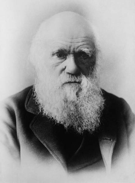 Geologist Wall Art - Photograph - Charles Darwin - Father Of Evolutionary Theory by War Is Hell Store