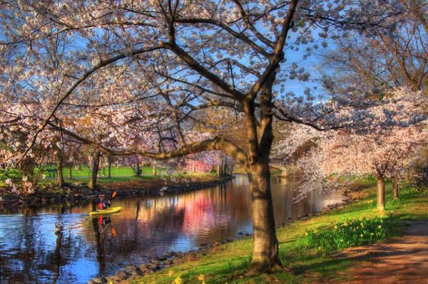 Photograph - Charles River Esplanade In Spring by Joann Vitali