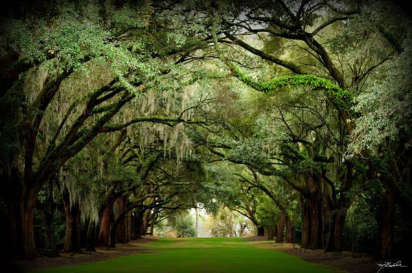 Charleston South Carolina Photograph - Charles Towne Landing 0198 by Melissa Wyatt