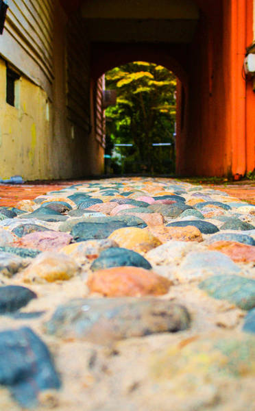 Photograph - Charleston Cobble by Stacey Rosebrock