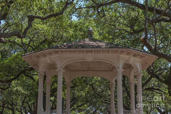 Photograph - Charleston Foliage by Dale Powell