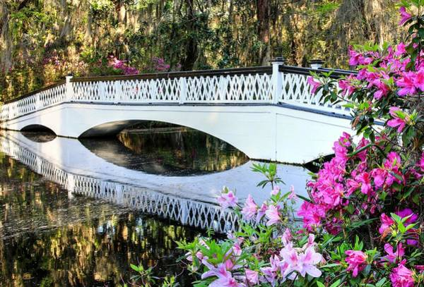 Photograph - Charleston Magnolia Plantation White Lattice Bridge And Azaleas by Carol Montoya