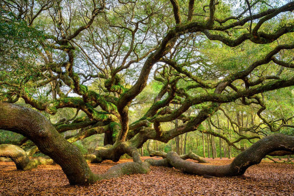 Charleston Photograph - Charleston Sc Angel Oak Tree South Carolina Landscape by Dave Allen
