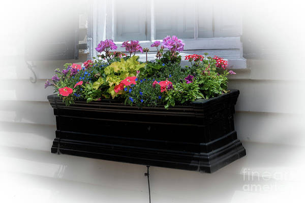 Photograph - Charleston Window Box by Dale Powell