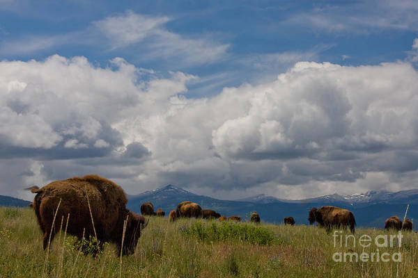 Photograph - Charlie Russel Clouds by Katie LaSalle-Lowery