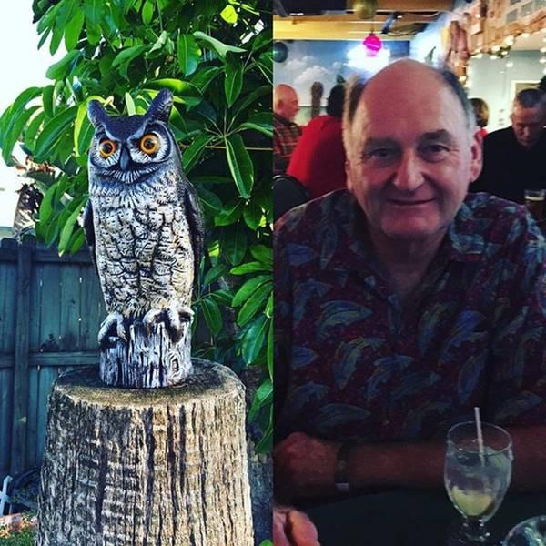 Photograph - @charlieabbott1249 Brought This Owl by Melissa Abbott