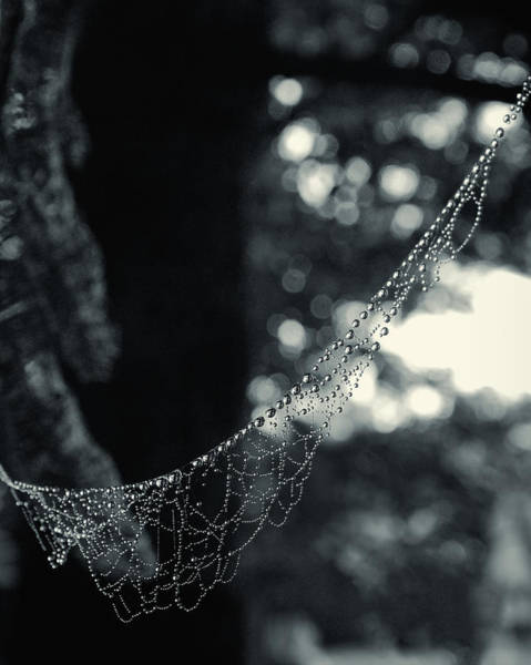Photograph - Charlotte's Necklace by Daniel George