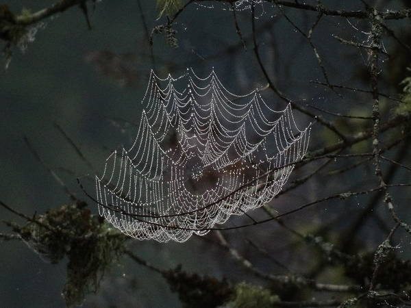 Photograph - Charlotte's Web by Mary Vinagro