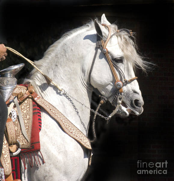 Andalusian Stallion Wall Art - Photograph - Charro Stallion by Jim And Emily Bush