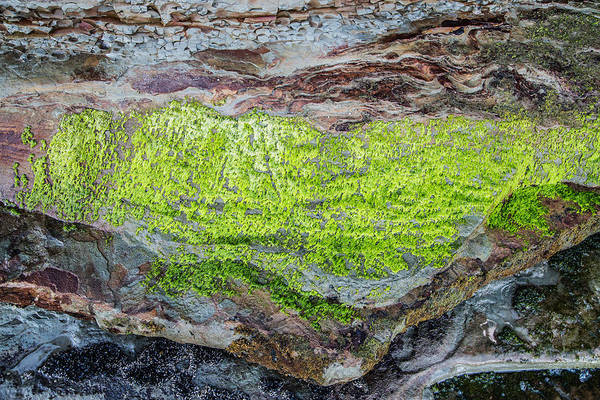 Photograph - Chartreuse Abstraction by Steven Schwartzman