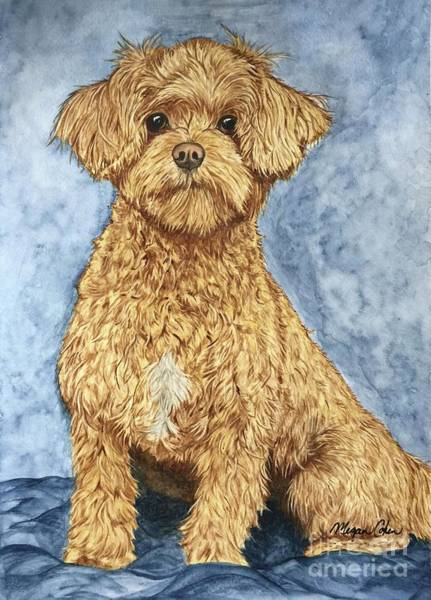 Maltipoo Wall Art - Painting - Chase The Maltipoo by Megan Cohen