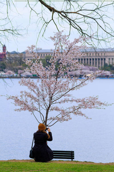 Photograph - Chasing Blossoms by Edward Kreis