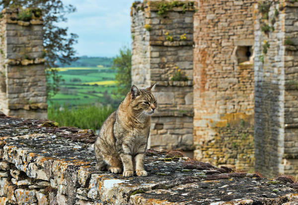 Chateauneuf Photograph - Chateau Cat, Chateauneuf, Cote-d'or, France by Curt Rush