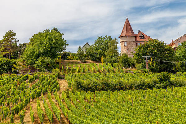 Chateau Photograph - Chateau In A Vineyard by W Chris Fooshee